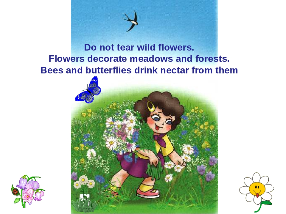 Do not tear wild flowers. Flowers decorate meadows and forests. Bees and butt...