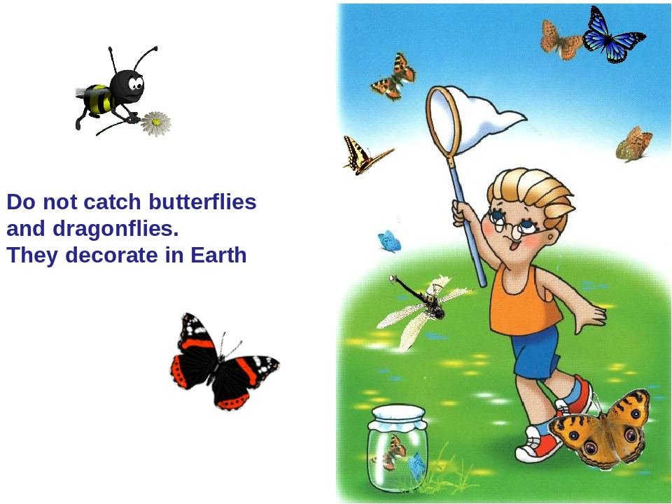 Do not catch butterflies and dragonflies. They decorate in Earth