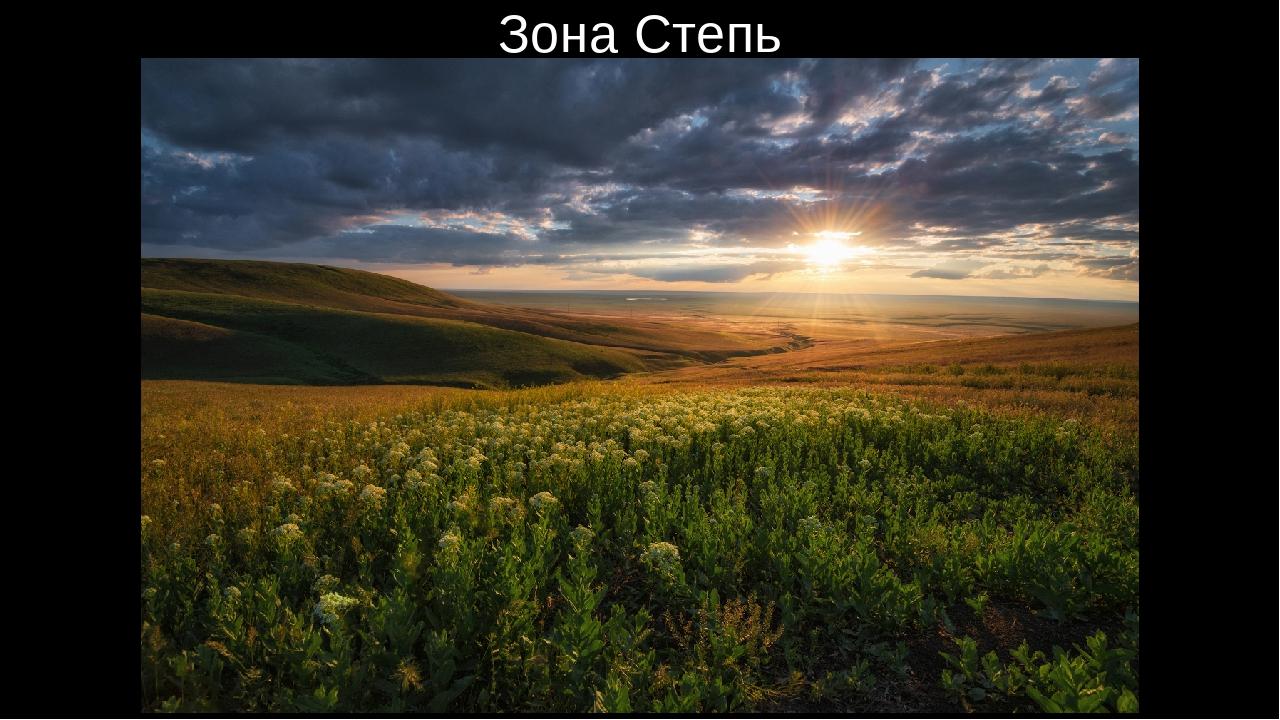 природные зоны россии степи разводить утконосов неволе