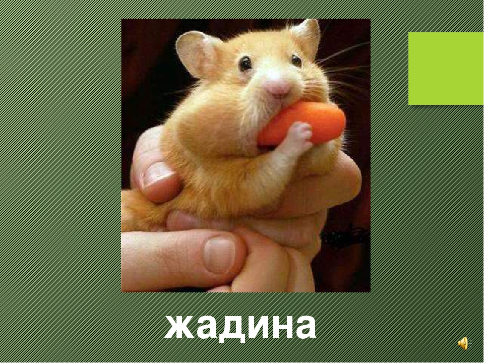 Года фирме, смешная открытка для жадины
