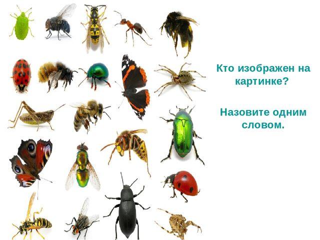 Изображенное на рисунке насекомое