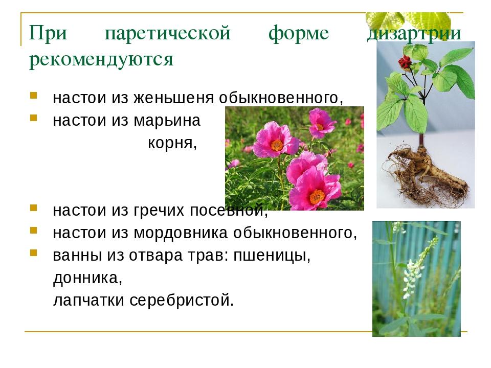 Дикий пион - марьин корень встречается в наших лесах.