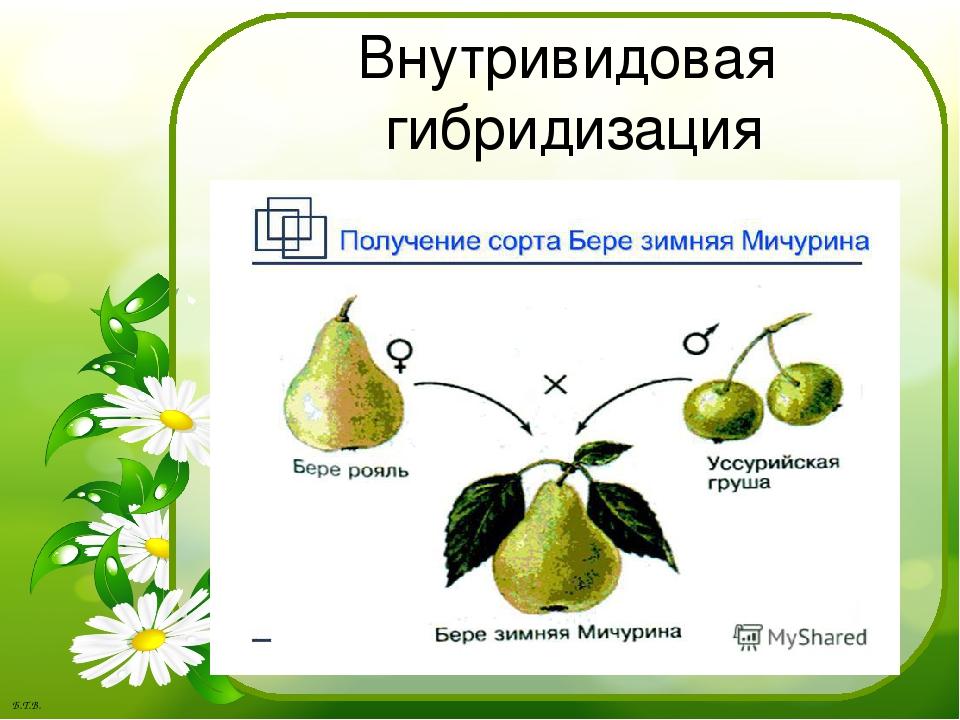 картинки гибридизации растений камерами тоже