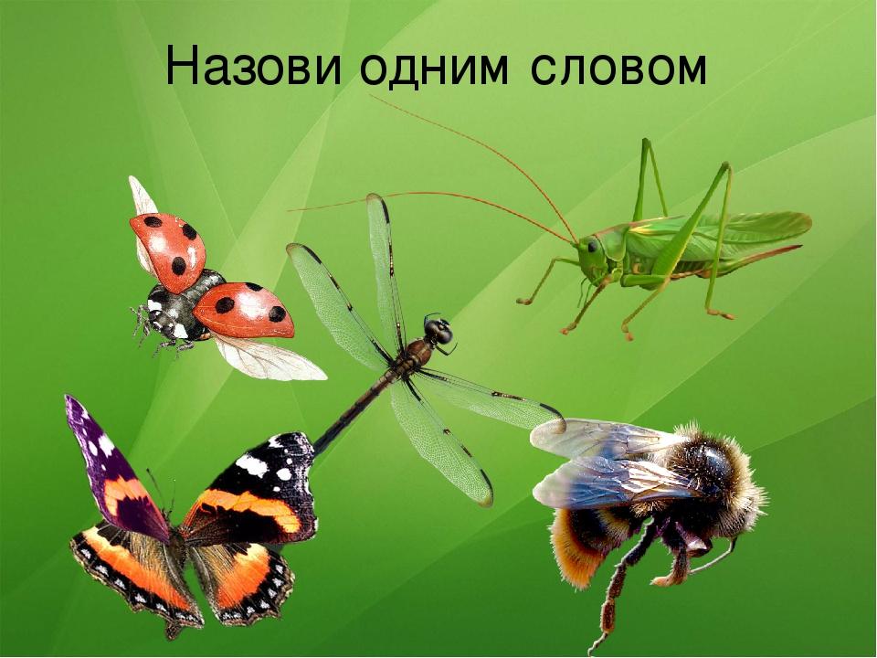 можно оформить насекомые картинки слайд род африканских многолетних