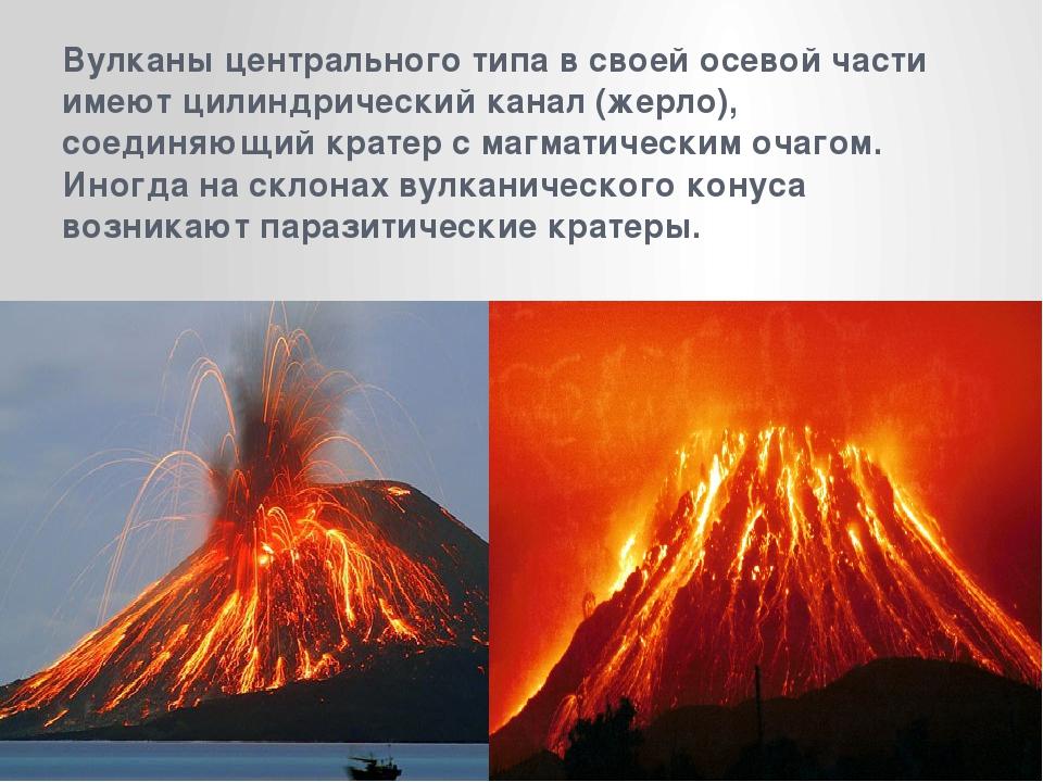 растение линейные и центральные вулканы картинки вобще, весь кот