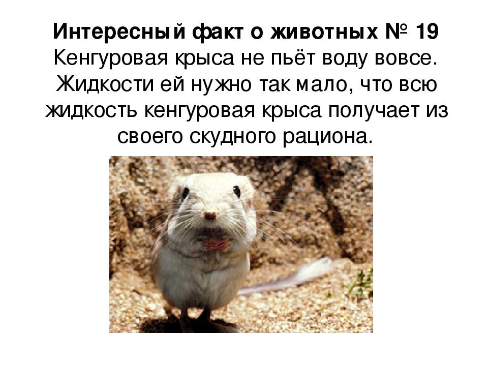 интересные факты о животных с картинками для 4 класса оснащены телевизором