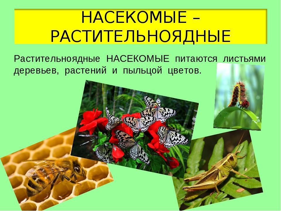 Картинки растительноядных насекомых