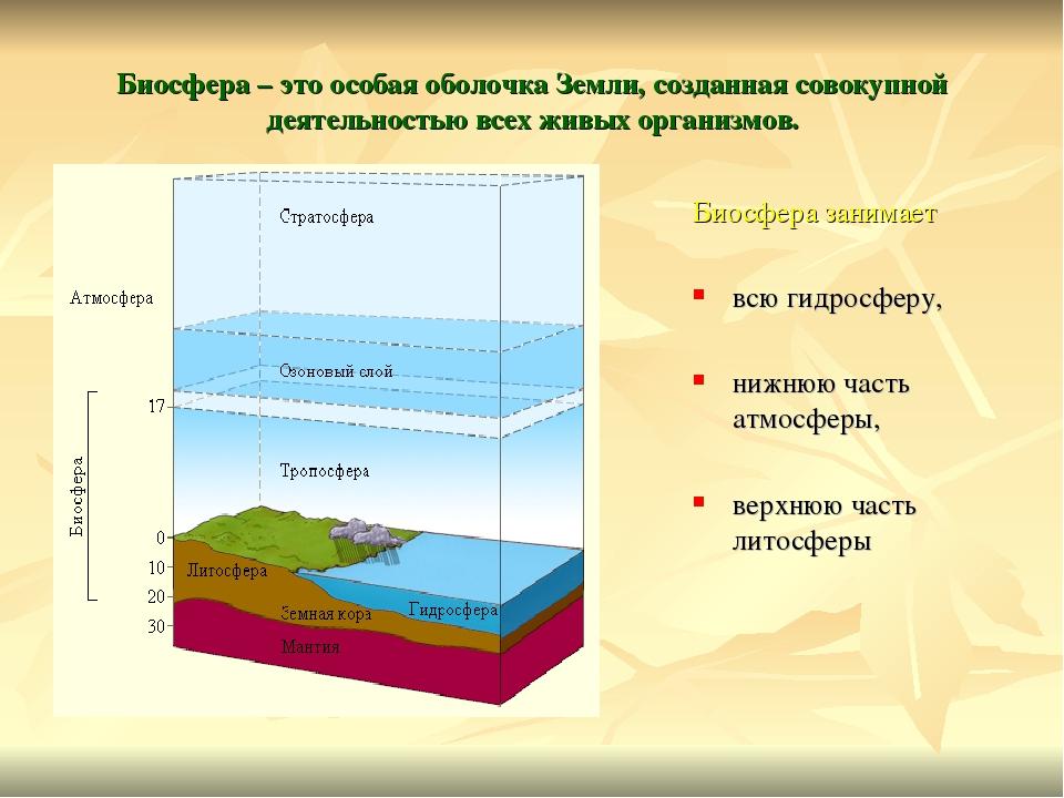 Экосфера экологическая оболочка земли картинки самом деле