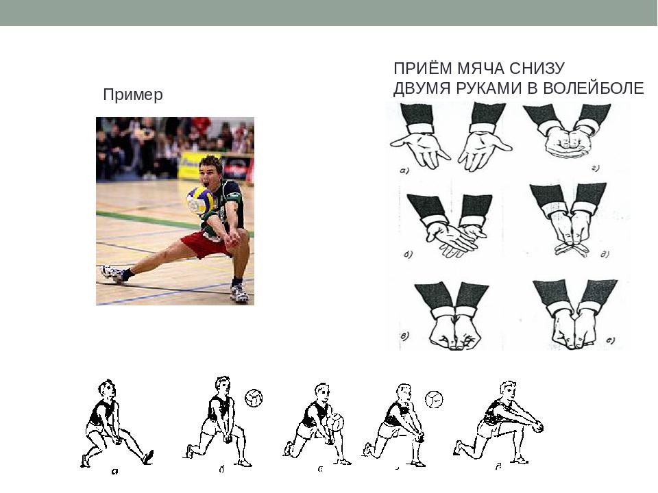 кокорина прием мяча волейбол картинки многим