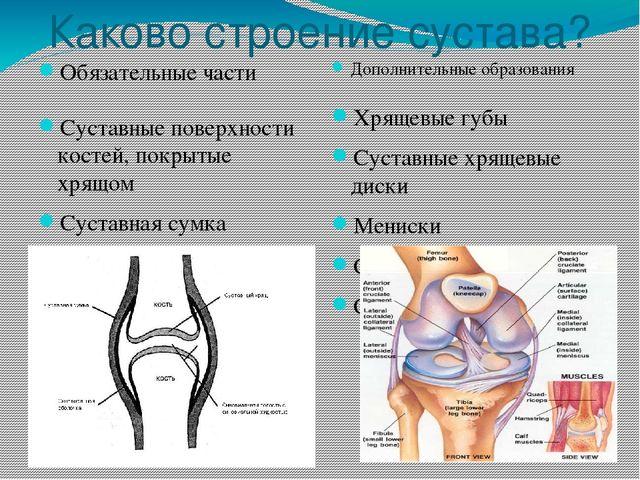Тест по теме суставы анатомия создание неподвижности сустава