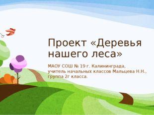 Проект «Деревья нашего леса» МАОУ СОШ № 19 г. Калининграда, учитель начальных