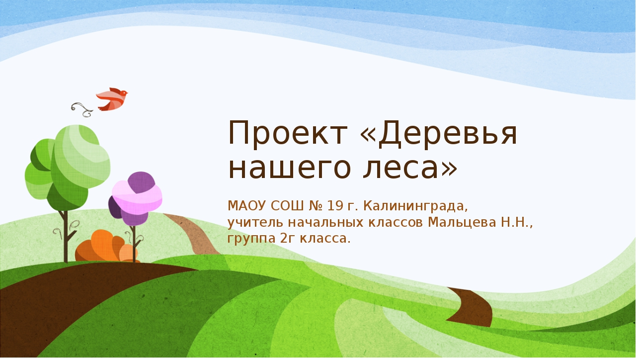 Проект «Деревья нашего леса» МАОУ СОШ № 19 г. Калининграда, учитель начальных...