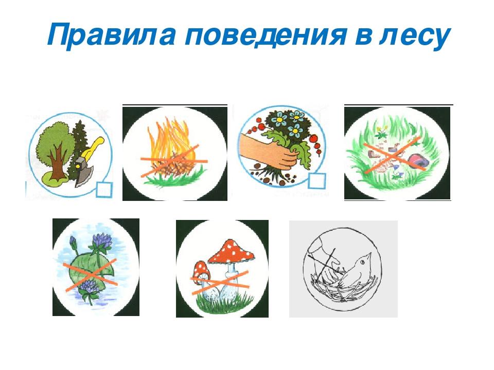 Поведение в лесу правила в картинках