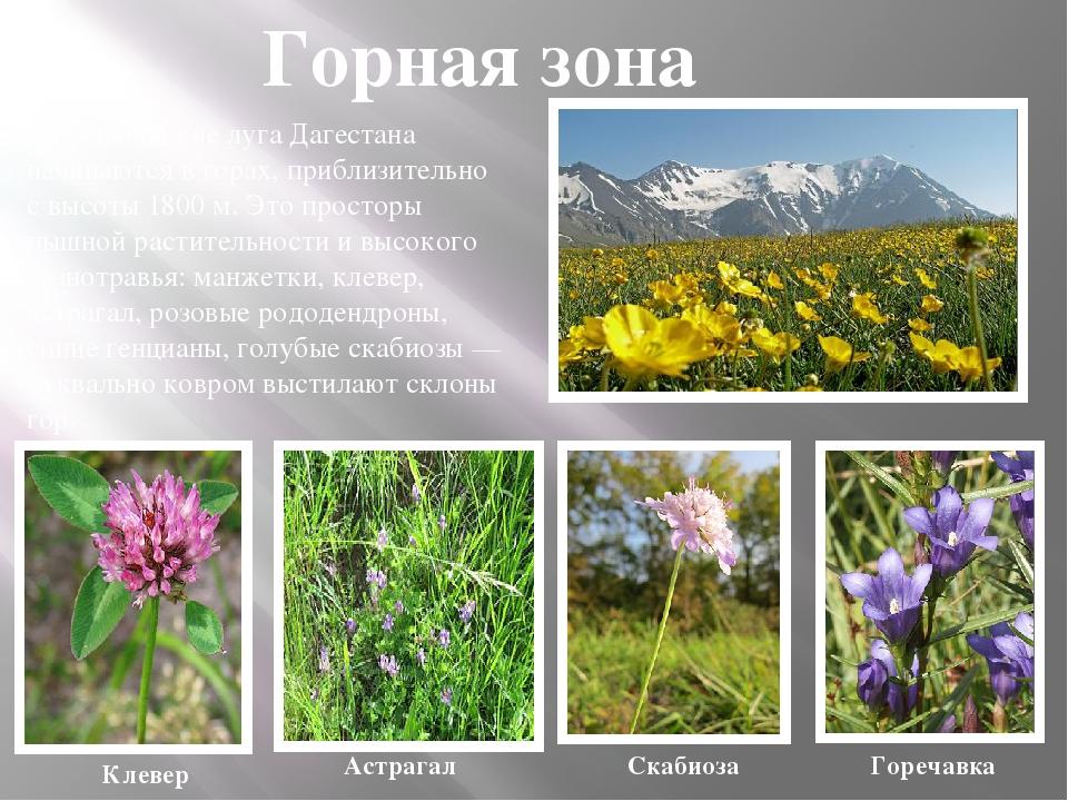 Растительный мир дагестана доклад 1124