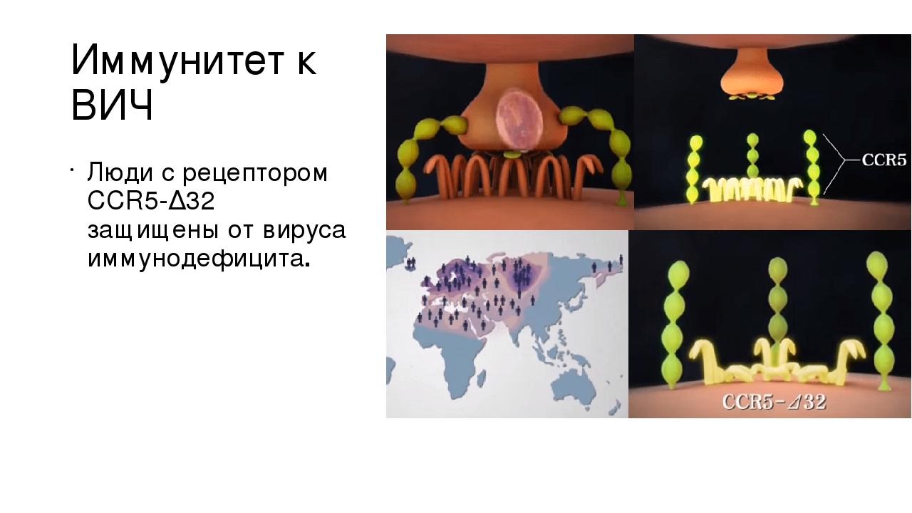 Иммунитет к ВИЧ Люди с рецептором CCR5-Δ32 защищены от вируса иммунодефицита.