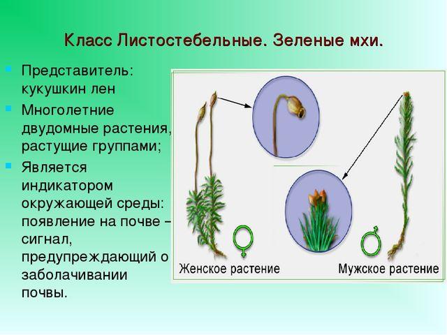 6 класс биология пасечник тест про мхи