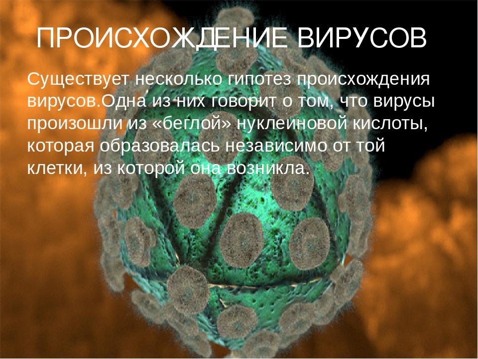 ПРОИСХОЖДЕНИЕ ВИРУСОВ Существует несколько гипотез происхождения вирусов.Одн...