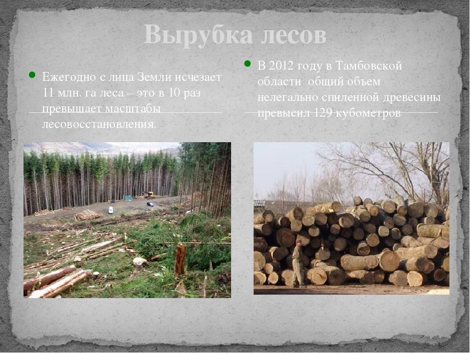 Вырубка лесов Ежегодно с лица Земли исчезает 11 млн. га леса – это в 10 раз п...