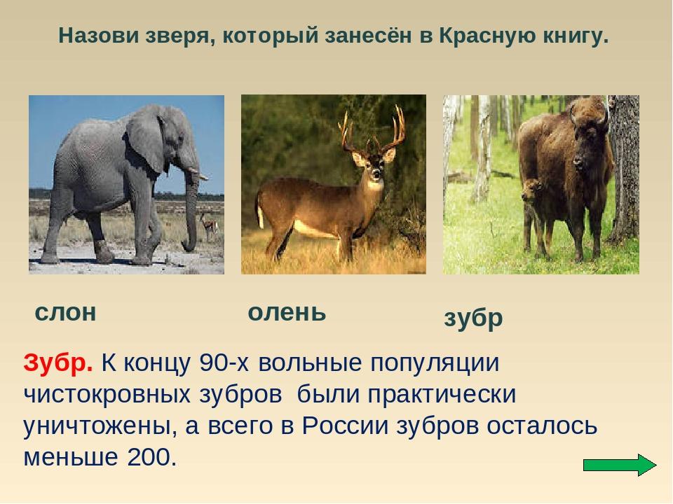 начали фото животных россии занесенные в красную книгу берегу ласкового