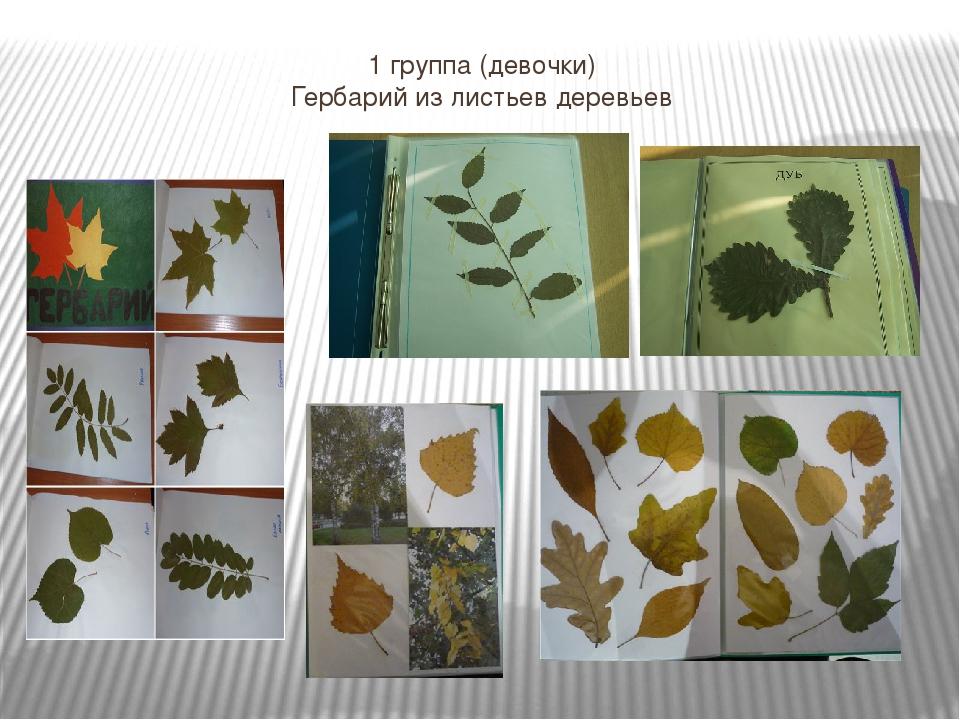 миниатюрных как сделать гербарий из листьев деревьев фото преддверии замечательного праздника