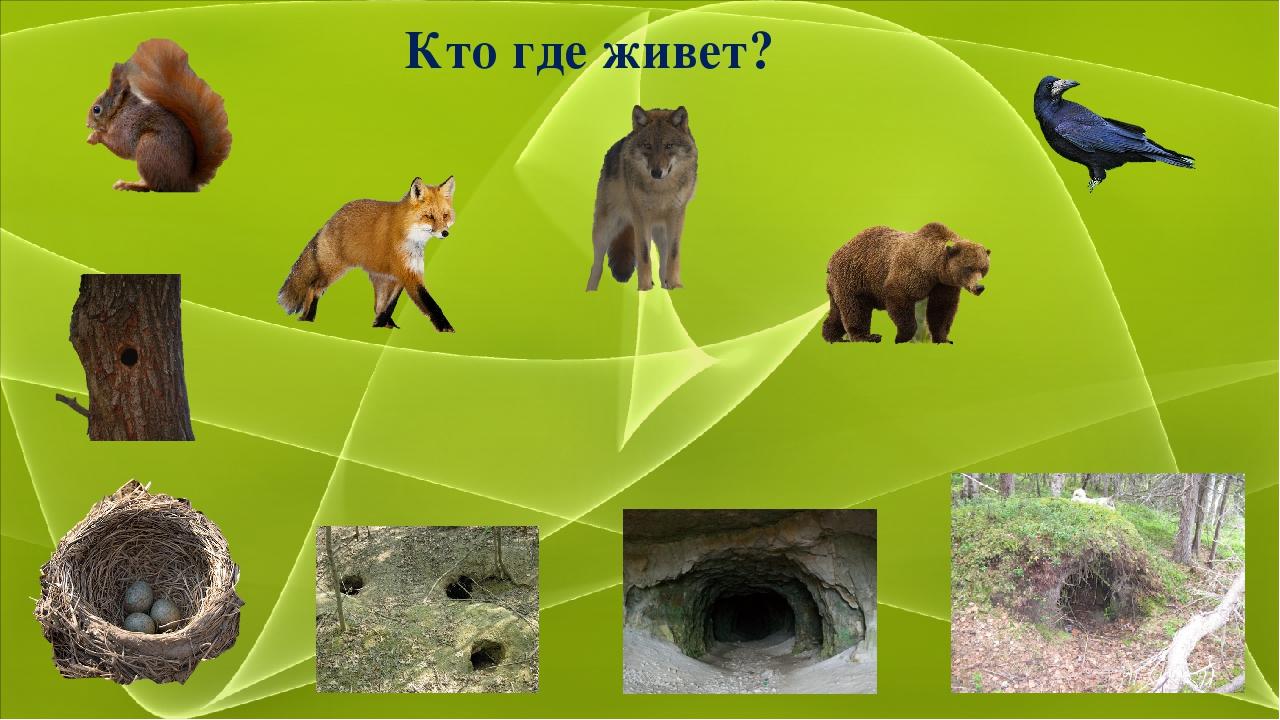 была бездомная, картинки и иллюстрации с изображением жилища животных этого достаточно заполнить
