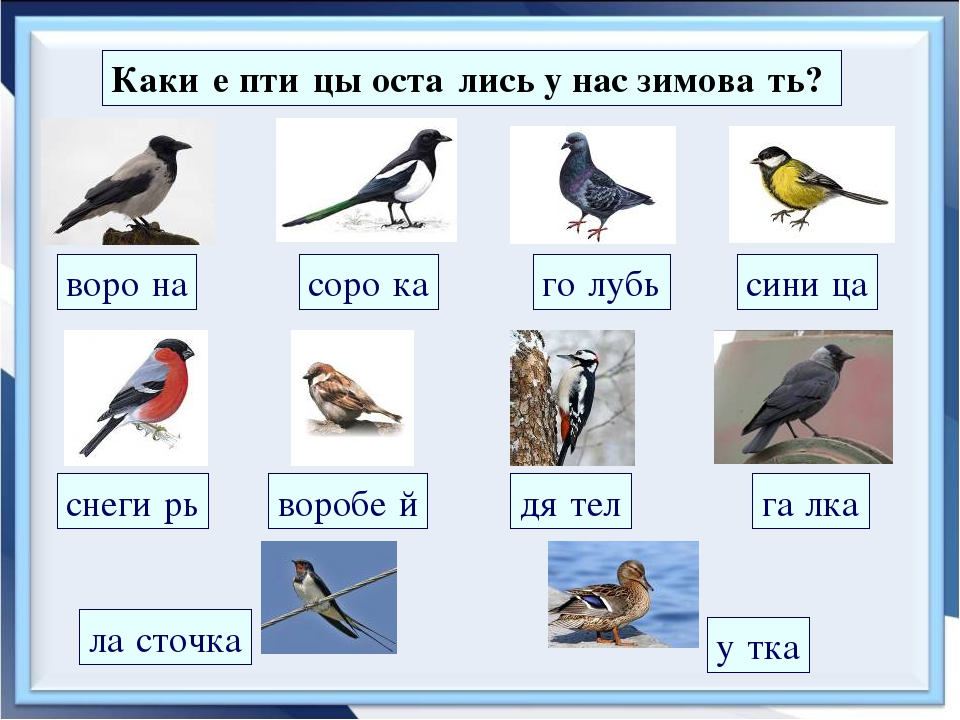 Птицы которые зимуют в беларуси картинки была тогда
