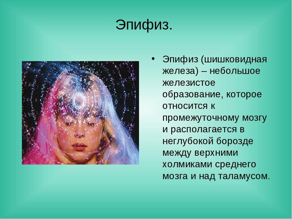 Эпифиз. Эпифиз (шишковидная железа) – небольшое железистое образование, котор...