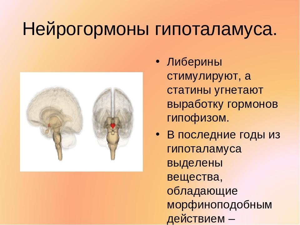 Нейрогормоны гипоталамуса. Либерины стимулируют, а статины угнетают выработку...