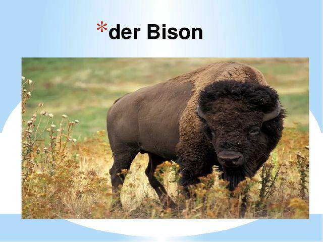 der Bison