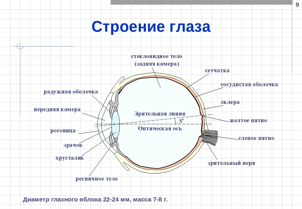 Схема строения глаза человека в хорошем качестве поражаешься, чего
