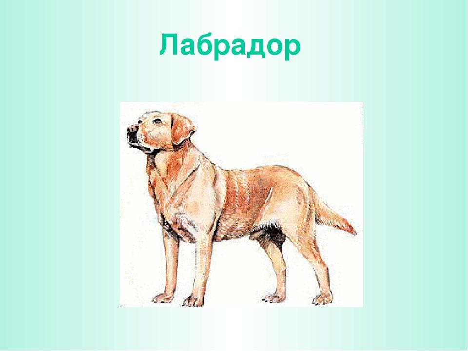 Песнь о собаке в картинках окружающий мир купила классический