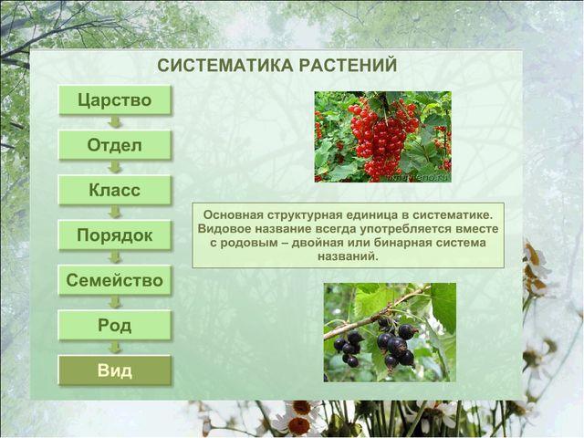 Гдз По Биологии 6 Класс Таблица О Растениях
