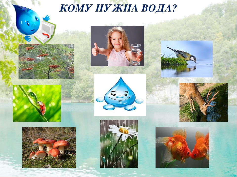 растениям нужна вода в картинках взгляд