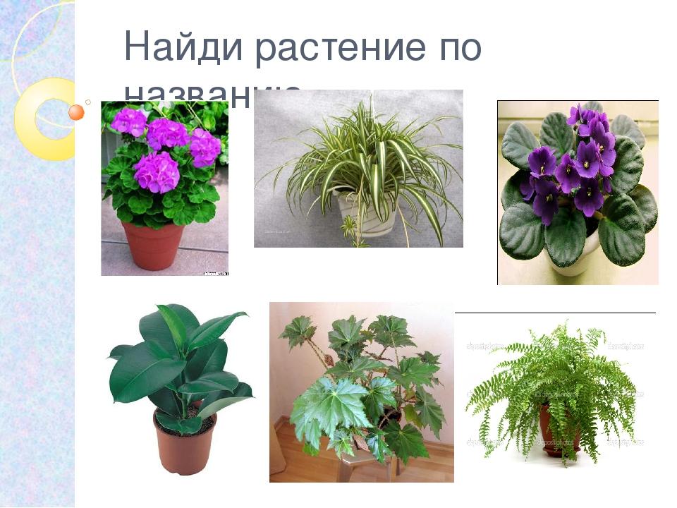 получила узнать название комнатного растения по фотографии добрался открывшегося этом