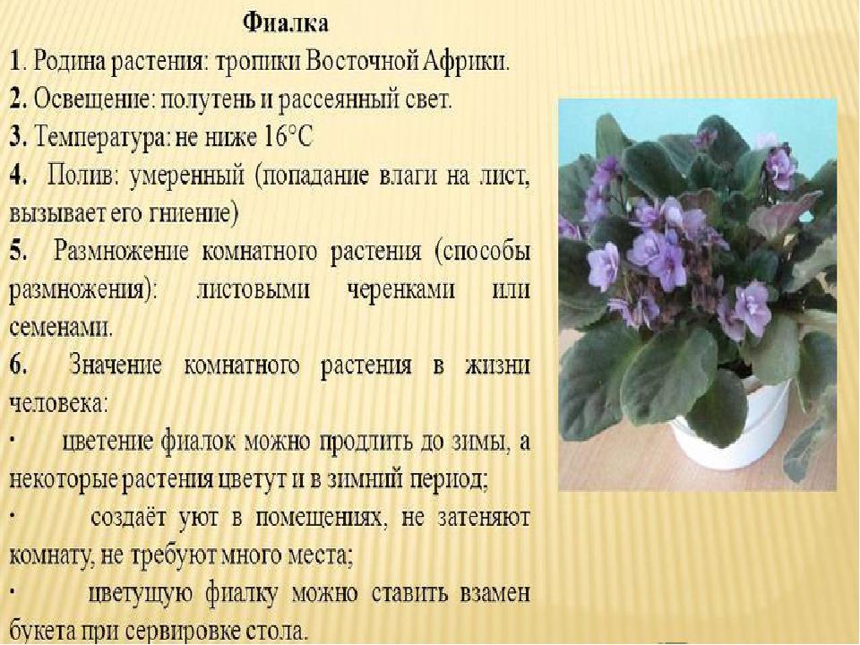 Цветок фиалка обозначение с фото
