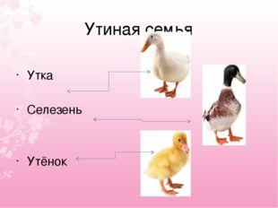 Утиная семья Утка Селезень Утёнок
