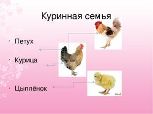 Петух Курица Цыплёнок Куринная семья