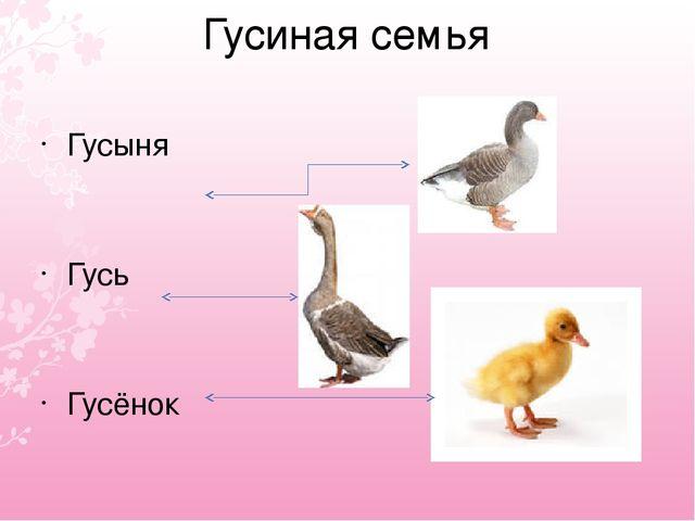 Гусиная семья Гусыня Гусь Гусёнок