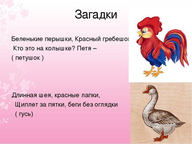 Загадки Беленькие перышки, Красный гребешок, Кто это на колышке? Петя – ( пет...