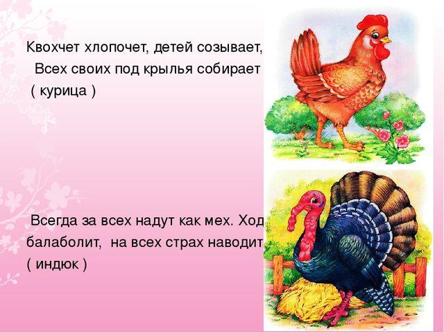 Квохчет хлопочет, детей созывает, Всех своих под крылья собирает ( курица ) В...