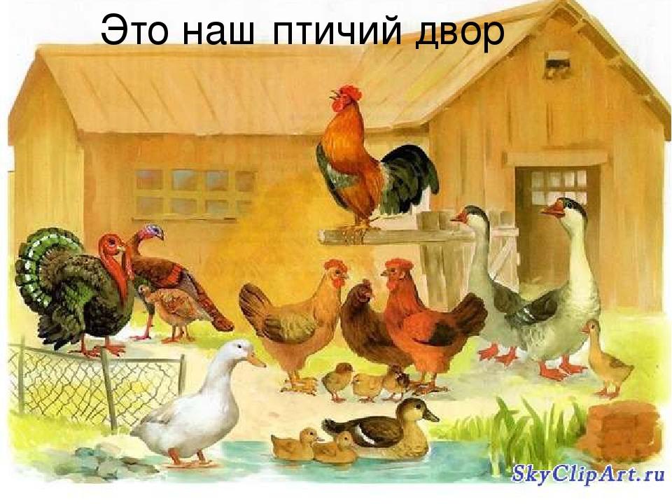 Это наш птичий двор