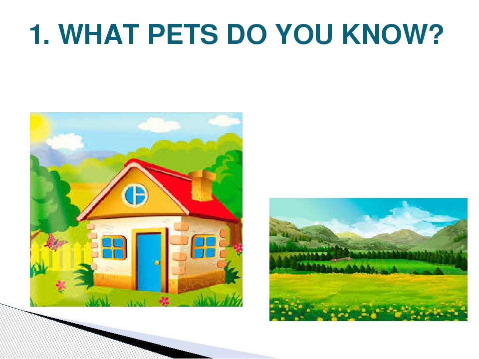 1. WHAT PETS DO YOU KNOW?