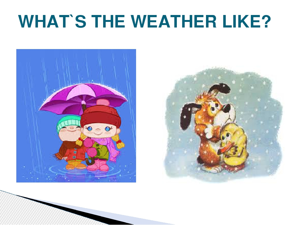 WHAT`S THE WEATHER LIKE?
