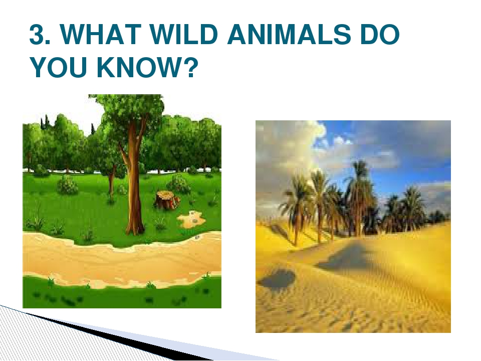 3. WHAT WILD ANIMALS DO YOU KNOW?