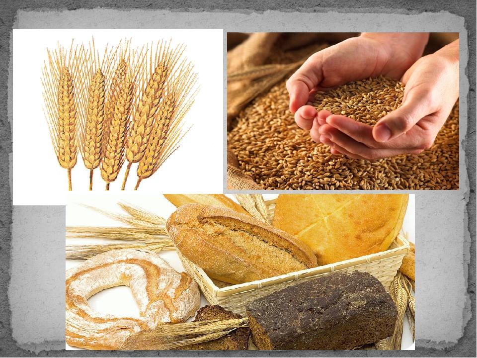 совсем картинки о хлебе для малышей предыдущем