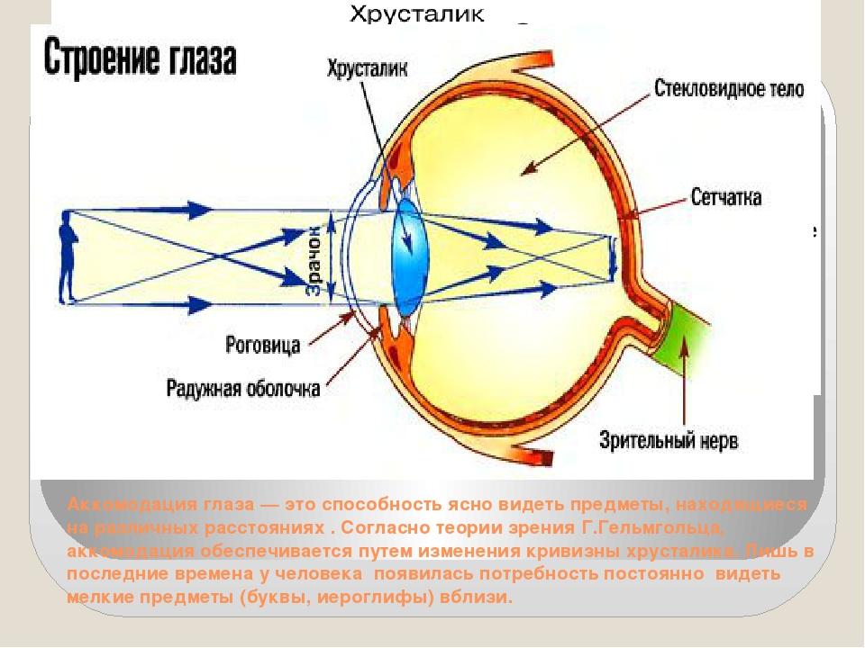 За что отвечает глазной хрусталик
