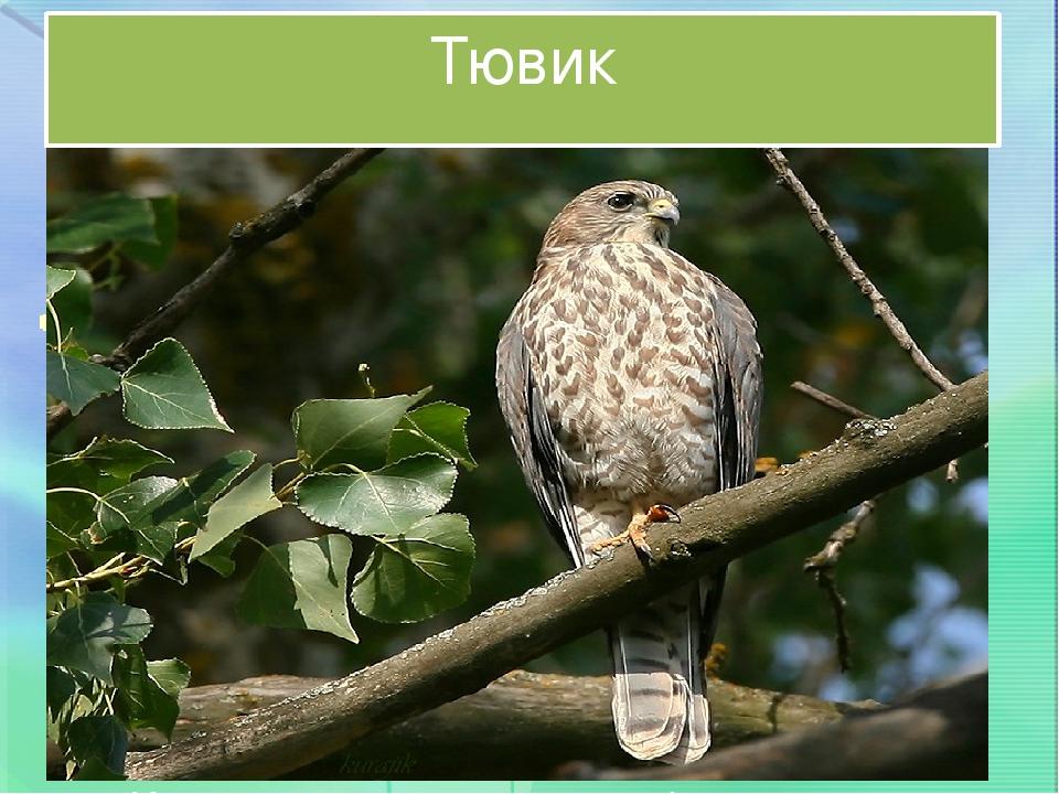 редкие птицы ставропольского края естественных
