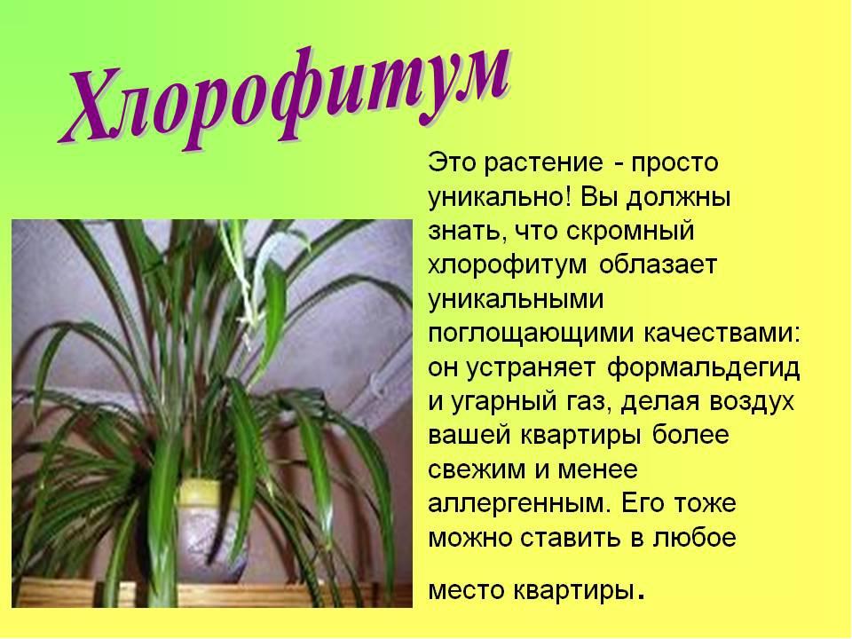 Картинки комнатных растений с названиями и кратким описанием словом, женщина-руководитель