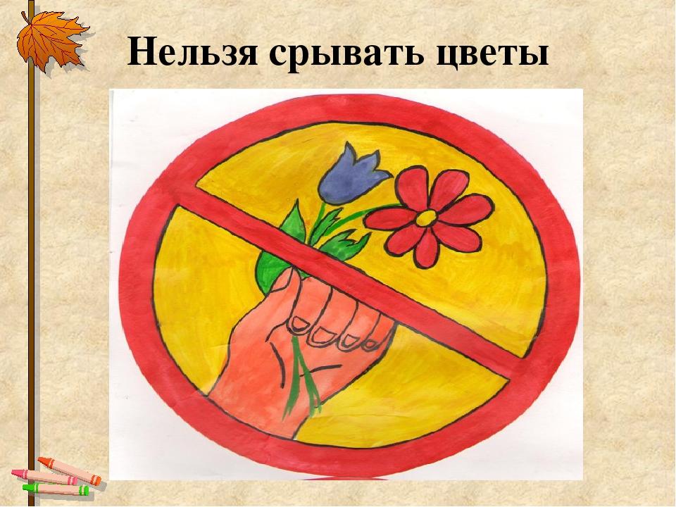 могу знак не рвите цветы картинки время штиля альбатросы