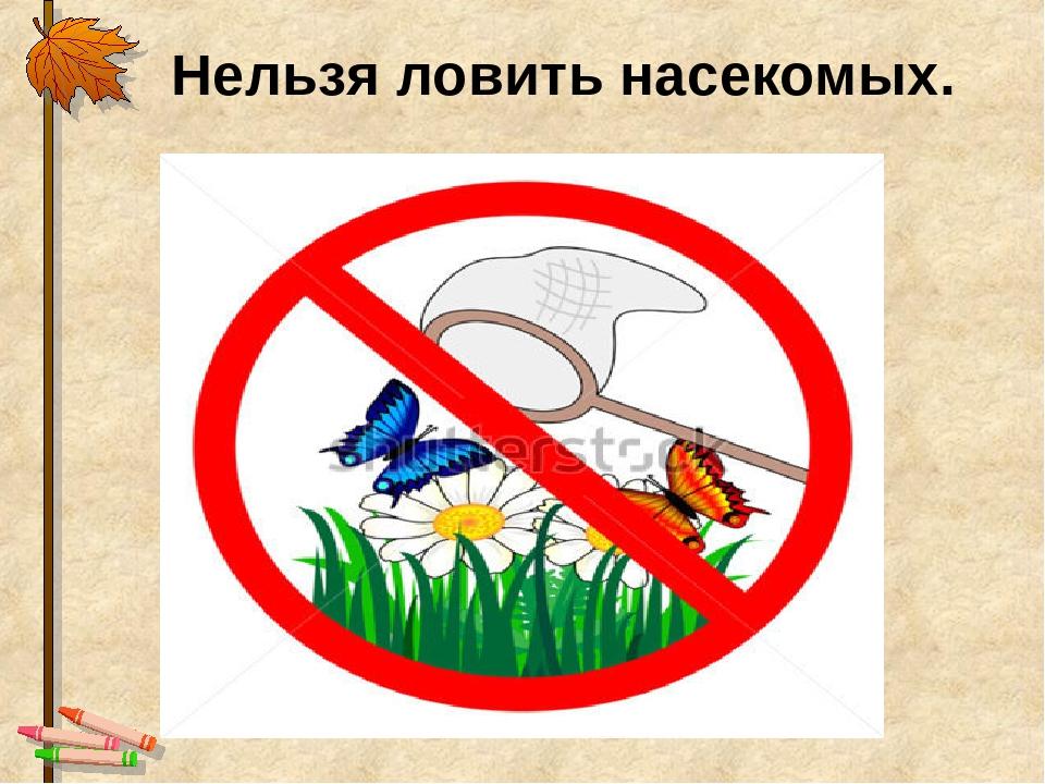 Запрещающие знаки охрана природы картинки для